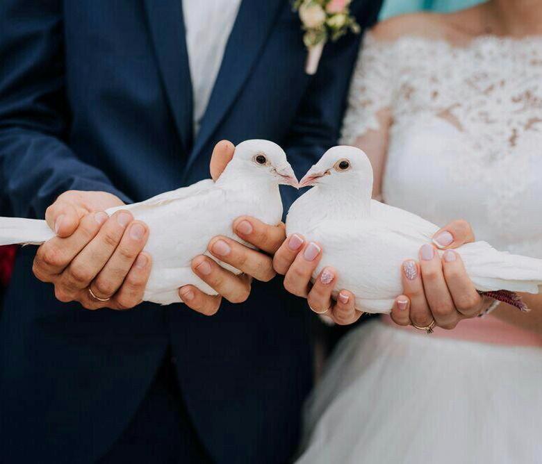 свадебные фото кольца голубей